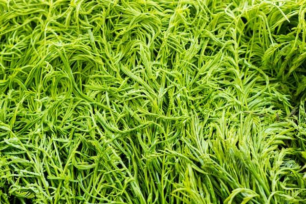 Vegetais verdes frescos do close-up no mercado.
