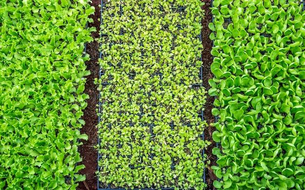 Vegetal de canteiro