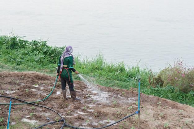 Vegetal molhando do fazendeiro com o tubo de borracha no campo de tailândia.