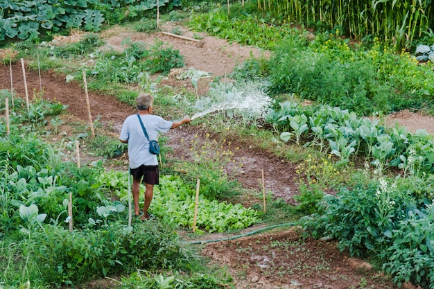 Vegetal molhando do fazendeiro no campo de tailândia.