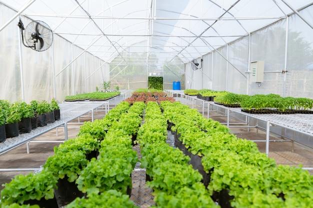Vegetal orgânico para plantar na fazenda para berçário ambiental