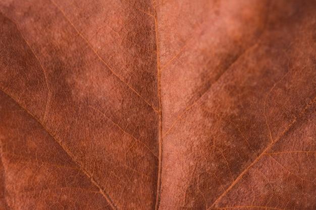 Veias de folha abstrata. fim de licença de outono marrom acima. folha de textura velha. folha de outono colorida brilhante bonita. fotografia macro