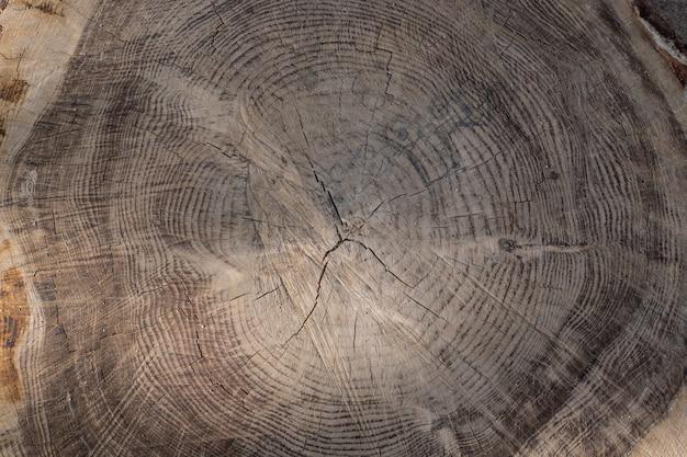 Veias de tronco cortado dando uma textura agradável