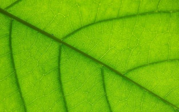 Veias em uma folha contra a luz com uma formiga rastejando na textura do meio