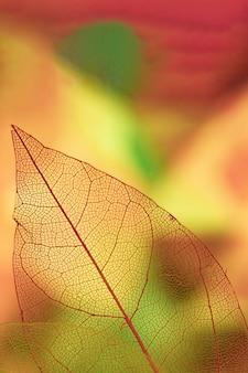 Veios de folha abstrata com amarelo