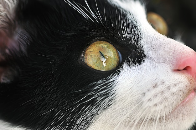 Veja, olhos de gato