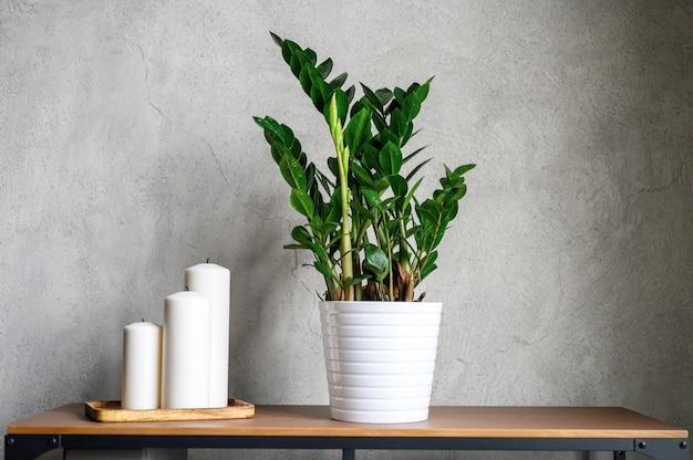 Velas brancas e planta na mesa contra a parede de concreto cinza