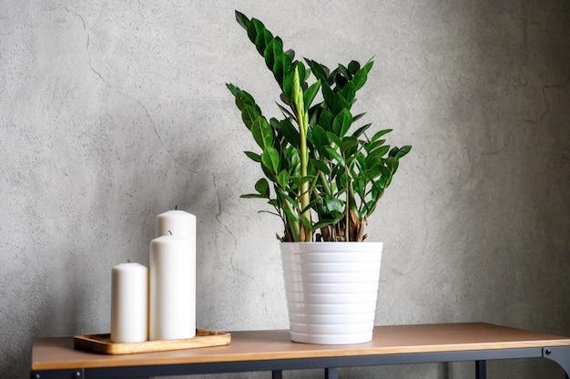 Velas e plantas zamioculcas na mesa de madeira e na parede de cimento cinza
