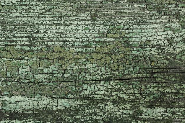 Velha árvore de madeira com textura vintage