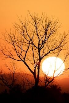Velha árvore morta isolada no céu dramático colorido com nuvens ao pôr do sol