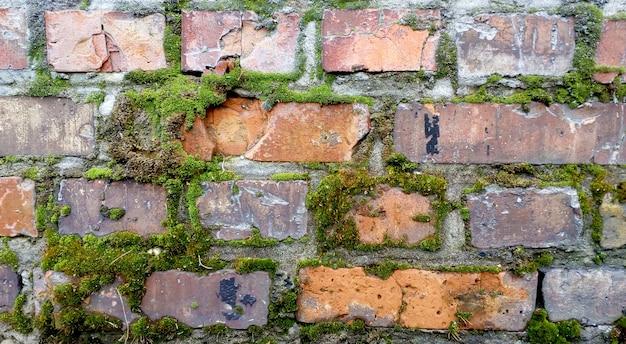 Velha parede de tijolos vermelhos. textura de musgo. demage fundo de tijolos.