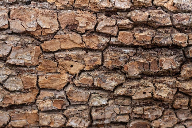 Velha textura de casca de árvore em relevo close-up. fundo natural