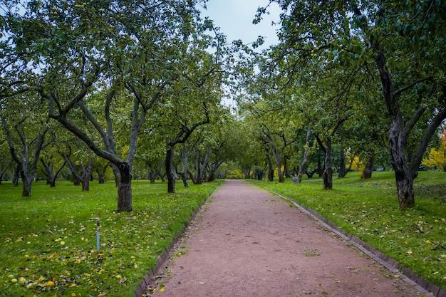 Velhas macieiras tortas, pomar no parque da cidade de outono.