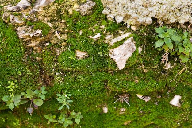Velho muro de pedra coberto de musgo