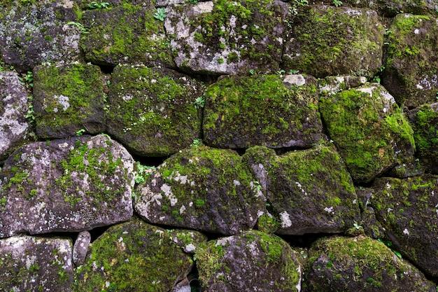 Velho muro de pedra coberto por musgo verde