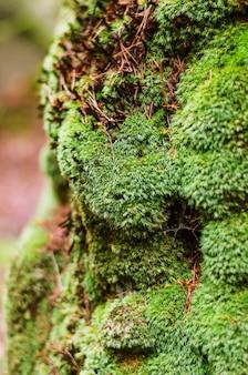 Velho musgo verde úmido na árvore