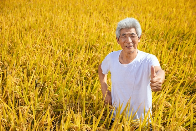 Velho no campo de arroz