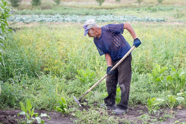 Velho trabalhando no jardim, avô cultiva a terra em seu jardim