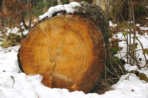 Velho tronco cortado coberto de musgo e neve na floresta de inverno