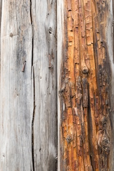 Velho tronco rachado