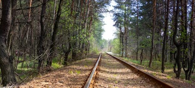 Velhos trilhos ferroviários enferrujados espalhados pela floresta em que o trem raramente viaja.