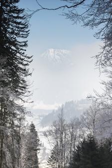 Ver através de galhos para um pico de montanha se escondendo atrás do nevoeiro.
