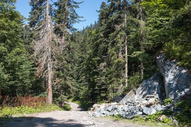 Ver cenas da floresta no parque nacional dombai, cáucaso, rússia, europa. paisagem de verão, clima ensolarado, céu azul dramático e dia ensolarado