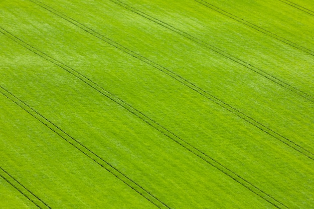 Ver os campos escoceses verdes com trigo e cevada de cima