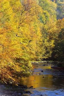 Ver os na paisagem de outono do rio e árvores em dia ensolarado