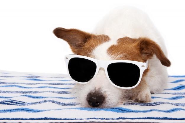 Verão de banho de cão usando óculos escuros e descansando na toalha