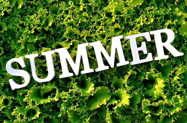 Verão do texto das letras brancas na alface verde encaracolado.