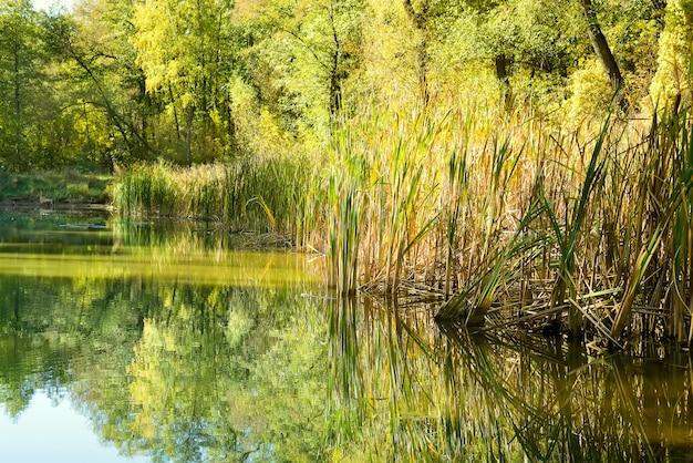 Verão floresta lago água paisagem