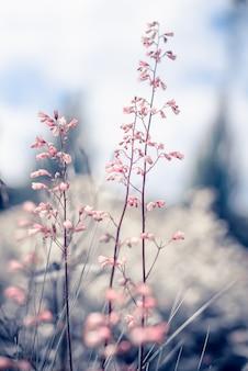 Verão vintage lindas flores no nascer do sol