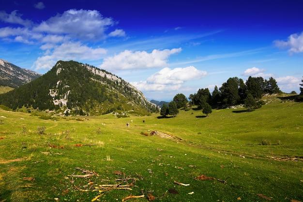 Verão, vista, montanha, prado