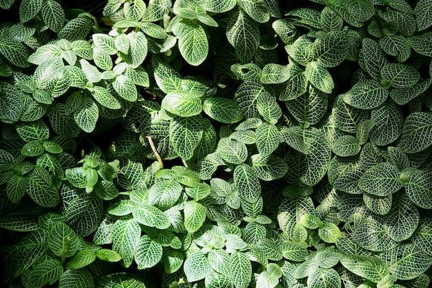 Verde deixar para plano de fundo com foco seletivo close-up