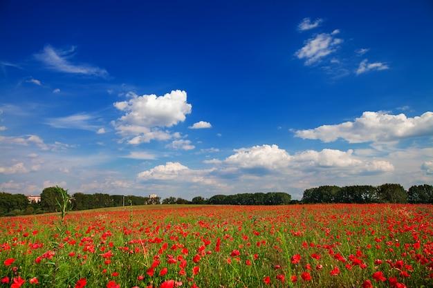 Verde e vermelho lindo fundo de campo de flores de papoula