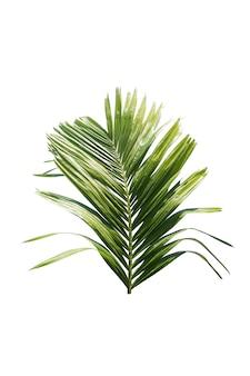 Verde, folha, de, árvore palma, isolado, branco, fundo
