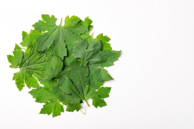 Verde folhas quadro abstrato