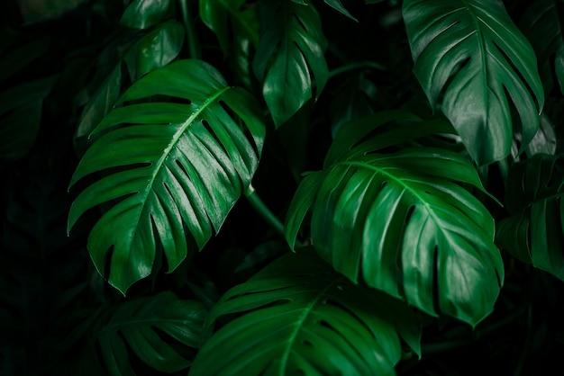 Verde monstera folha fundo tropical folha textura verde folha textura