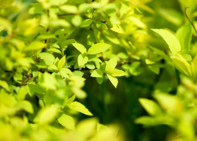 Verde natural com foco seletivo