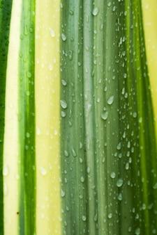 Verde natural de folhas e gotas de orvalho