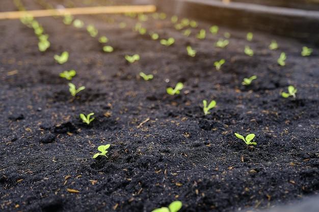 Verde, seedling, closeup, de, pequeno, rebento, em, jardim, em, orgânica, vegetal, verde
