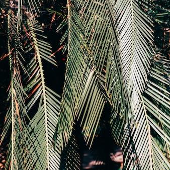 Verde tropical da moda. humor da selva