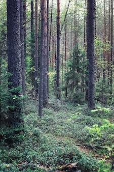 Verdes de primavera ao amanhecer na floresta. a natureza ganha vida no início da primavera.