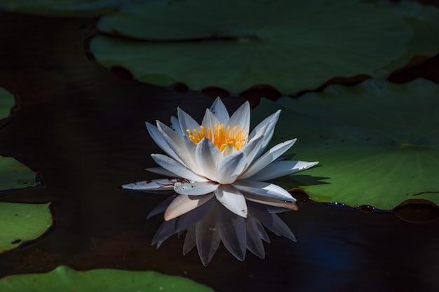 Verdura bonita de um pequeno pântano baleado de perto