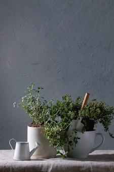 Verduras de jardinagem