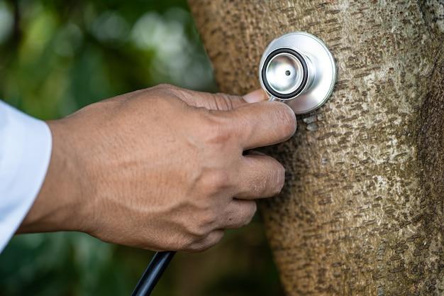 Verificando a saúde ouvindo a natureza da árvore com o estetoscópio biologia ecologia ambiente