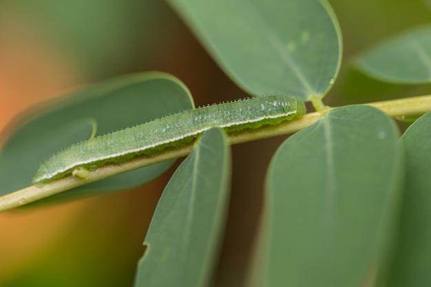 Vermes verdes nas filiais