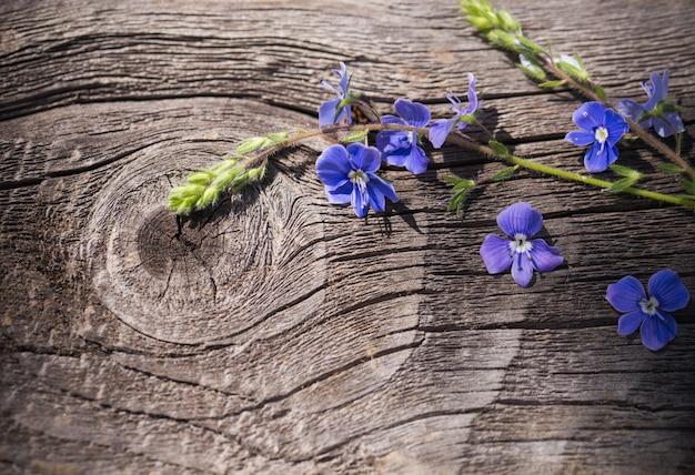 Veronica em um fundo de madeira