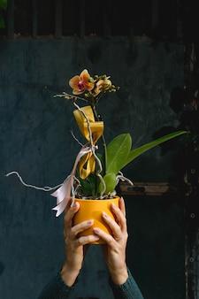 Vertical close-up mãos de mulher segurando uma orquídea amarela em um vaso.